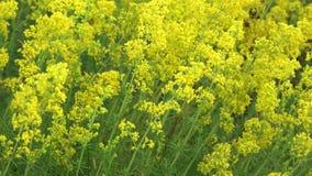 Żółci kwitnący wildflowers zbiory