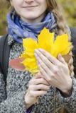 Żółci liście klonowi w żeńskich rękach Zakończenie Zdjęcia Stock