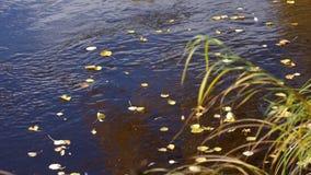 Żółci liście na nawadniają powierzchnię zbiory