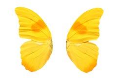 Żółci motyli skrzydła pojedynczy białe tło obraz stock