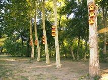 Żółci ptasi domy Zdjęcia Royalty Free