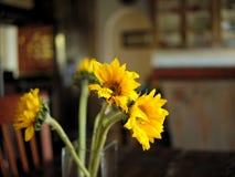 Żółci słoneczniki na łomotać stół obrazy stock