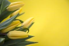 Żółci tulipany na żółtym tle Obrazy Royalty Free