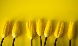 Żółci tulipany na żółtym tle Obraz Royalty Free