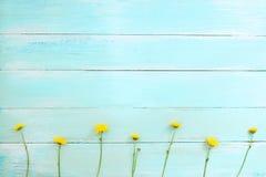 Żółta chryzantema kwitnie na błękitnym drewnianym tle fotografia stock