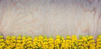 Żółta dzikich kwiatów rama na drewnianym tle Obrazy Royalty Free