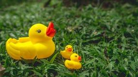 Żółta gumowa kaczka i kaczątka obraz royalty free