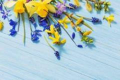 Żółta i błękitna wiosna kwitnie na drewnianym tle Fotografia Royalty Free