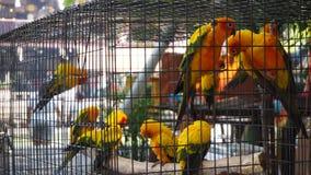 Żółta i pomarańczowa papuga w klatce przy jawnym parkiem Jandaya Parakeet obrazy royalty free
