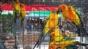Żółta i pomarańczowa papuga w klatce przy jawnym parkiem Jandaya Parakeet obraz royalty free