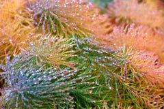 Żółta i zielona trawa z rosa kroplami zdjęcia stock