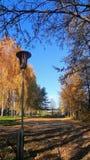 Żółta jesień zdjęcie stock