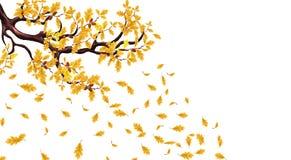 Żółta jesieni gałąź dąb z acorns Latać liście ilustracja ilustracji