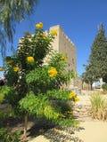 Żółta kwiat roślina i Colloso kasztel Obrazy Stock