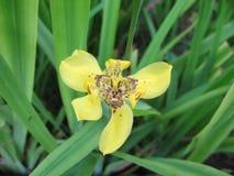 Żółta orchidea jest r na ziemi obraz royalty free