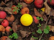 Żółta piłka w liściach i jabłkach zdjęcia stock