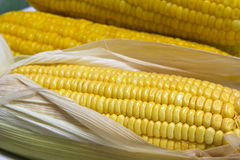 Żółta słodka kukurudza Obraz Stock