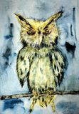 Żółta sowa na gałąź na turkusowym tle Fotografia Royalty Free