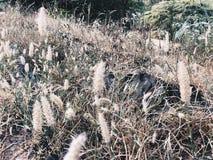 Żółta trawa Obraz Stock