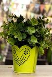 Żółta waza z rośliną zdjęcia stock