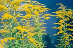 Żółta wildflowers bukieta lata świeżość Obrazy Royalty Free