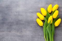 Żółta wiosna kwitnie, tulipan na szarym tle Fotografia Royalty Free