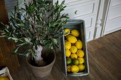 Żółte cytryny kłamają w drewnianym pudełku w kuchni zdjęcie royalty free