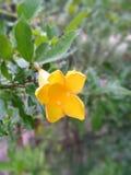 Żółte kwiat łuny zdjęcia stock