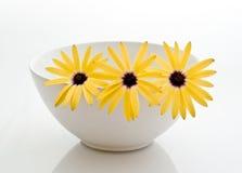 żółte kwiaty Obrazy Royalty Free