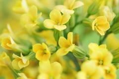 żółte kwiaty Zdjęcia Royalty Free
