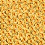 żółte róże zdjęcia stock
