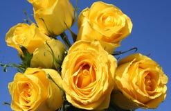 Żółte róże - niebieskie niebo fotografia stock