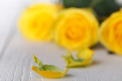Żółte róże, zamykają up na bielu stole Obrazy Stock