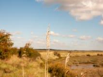 Żółte traw porady up zamknięte z krajobrazową nabrzeżną sceną w backg Fotografia Stock