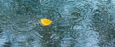 Żółtej brzozy liść w wodzie podczas deszczu, jesieni dżdżysty weather_ obrazy royalty free