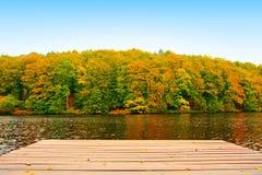 Żółtej jesieni bukowi drzewa i drewniany most odizolowywający obrazy royalty free