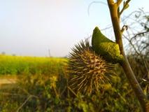 żółtej zieleni tła zakończenia krajobraz Zdjęcia Stock