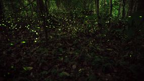 Żółty światło świetlika insekta latanie w noc lesie, tło Tajwan obraz stock