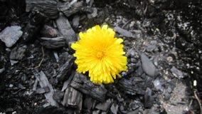 Żółty życie kontrast zdjęcie royalty free