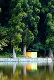 żółty Zdjęcia Royalty Free
