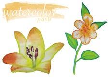 Żółty akwarela kwiatu set ilustracji
