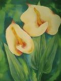 Żółty anthurium Zdjęcie Royalty Free