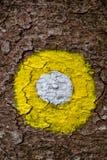 Żółty blask na śladzie obrazy royalty free