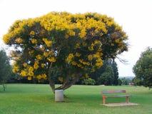 Żółty drzewny obraz royalty free