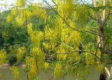 Żółty drzewo na tle roślinność fotografia royalty free