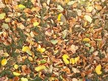 Żółty dywan liście fotografia royalty free
