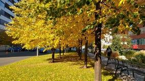 Żółty greenness w jesień słonecznym dniu zdjęcia stock