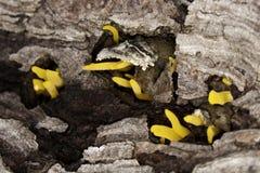 Żółty grzyb obraz stock