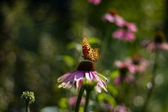 Żółty i czarny motyl fotografia stock