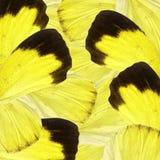 Żółty i czarny motyli skrzydła tło Zdjęcia Royalty Free